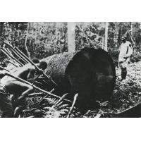 A.E.F. Débardage à bras d'une bille d'okoumé