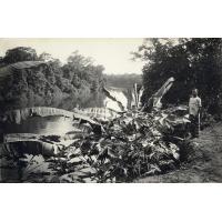 Abanga