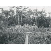 Abattage d'arbres sur le futur terrain de la maison de la mère et de l'enfant