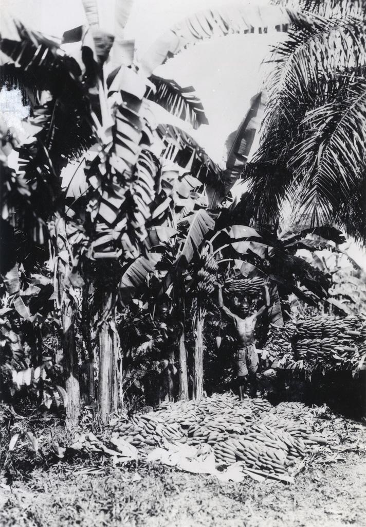 Agriculture, récolte de bananes, régimes en tas pour le chargement