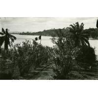 Allée conduisant à l'Ogooué