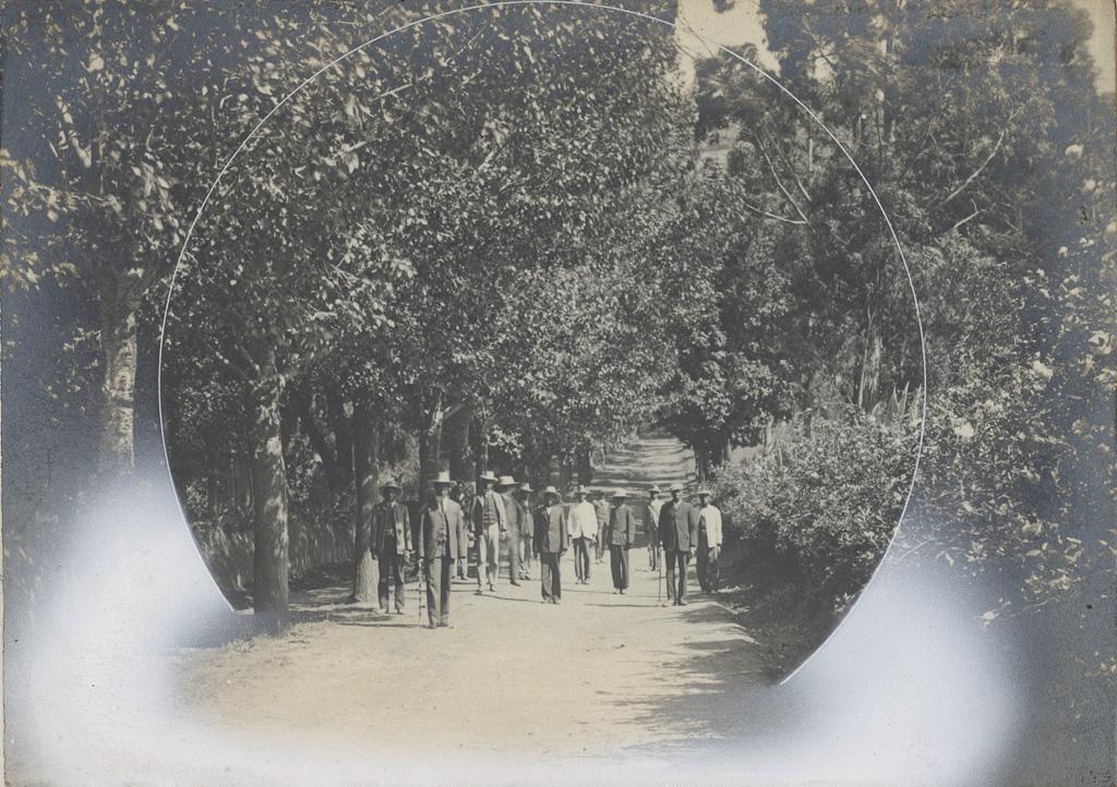 Allée d'eucalyptus dans un jardin missionnaire à Morija