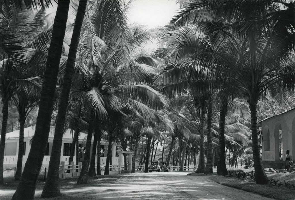 Allée de palmiers à Majunga