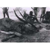 Antilope Coba