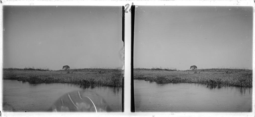Arbre couvert d'aigrelles blanches / Jacques Delpech (1914)