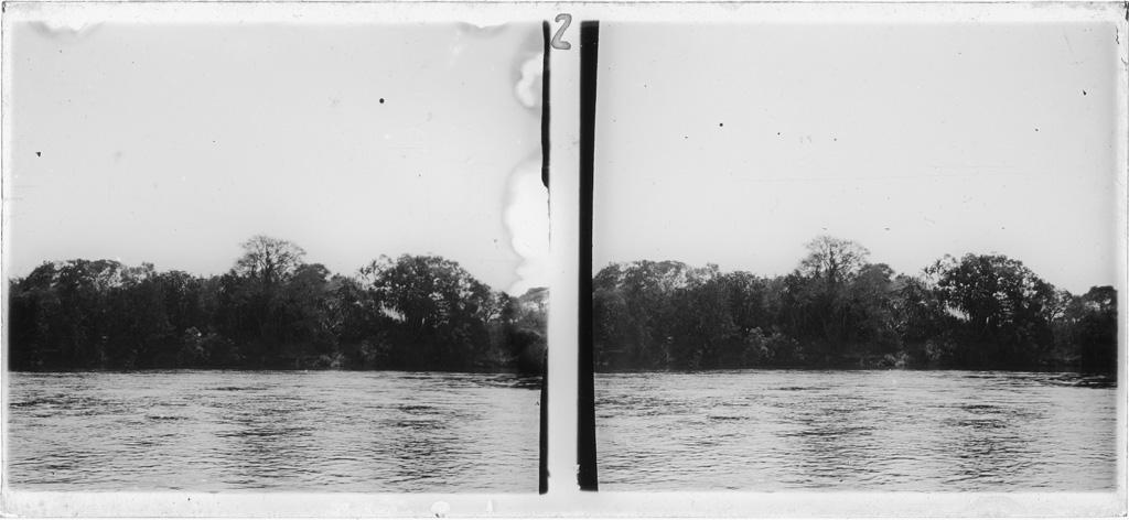 Arbres sur une rive du Zambèze