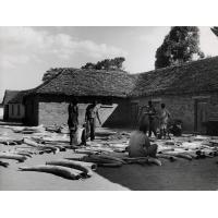 Au cours d'une tournée de deux mois pour enregistrer regulièrement les armes à feu et déceler le commerce illicite de l'ivoire dans le district de Lundazi, 400 vieux fusils furent saisis et 1 130