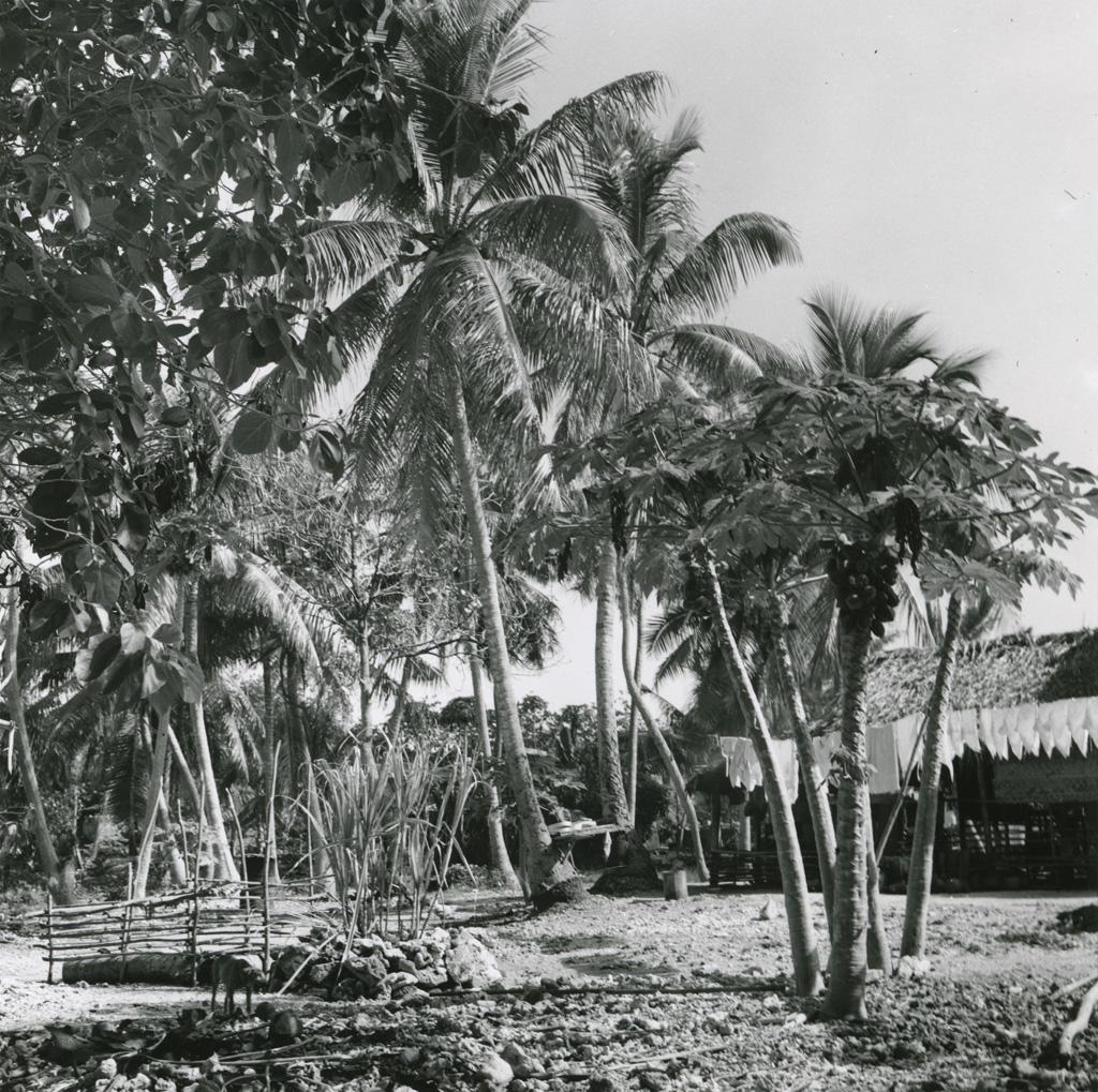 Aux abords d'une maison : un papayer, de la canne à sucre et un parc à cochons / Molet ([s.d.])