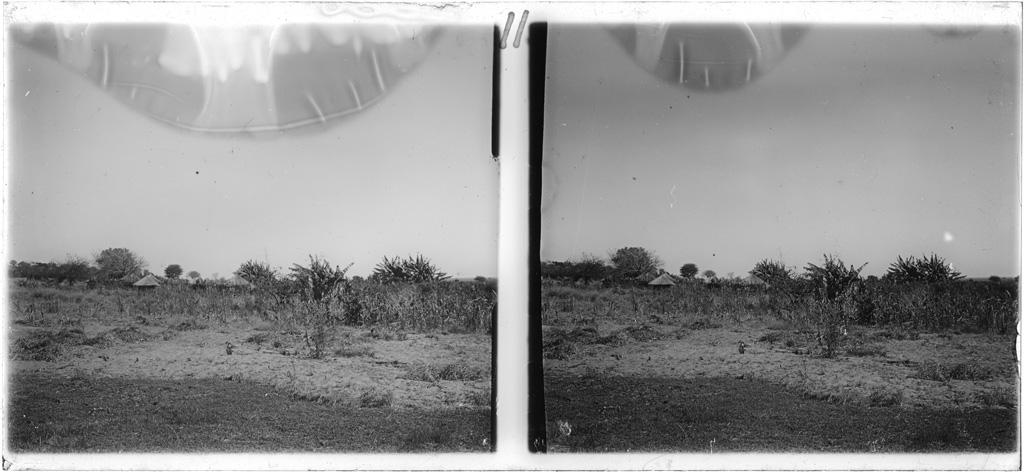 Bananiers au mokulo (le bas de la plaine) de Lukona