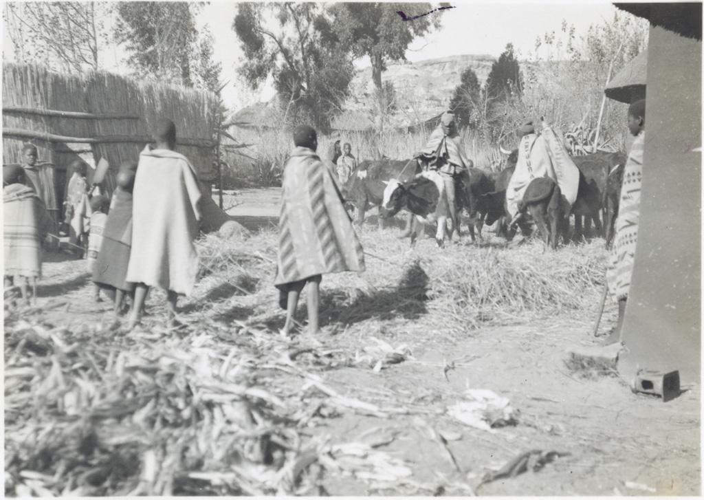 Battage du blé dans la cour d'un évangéliste, à Cana
