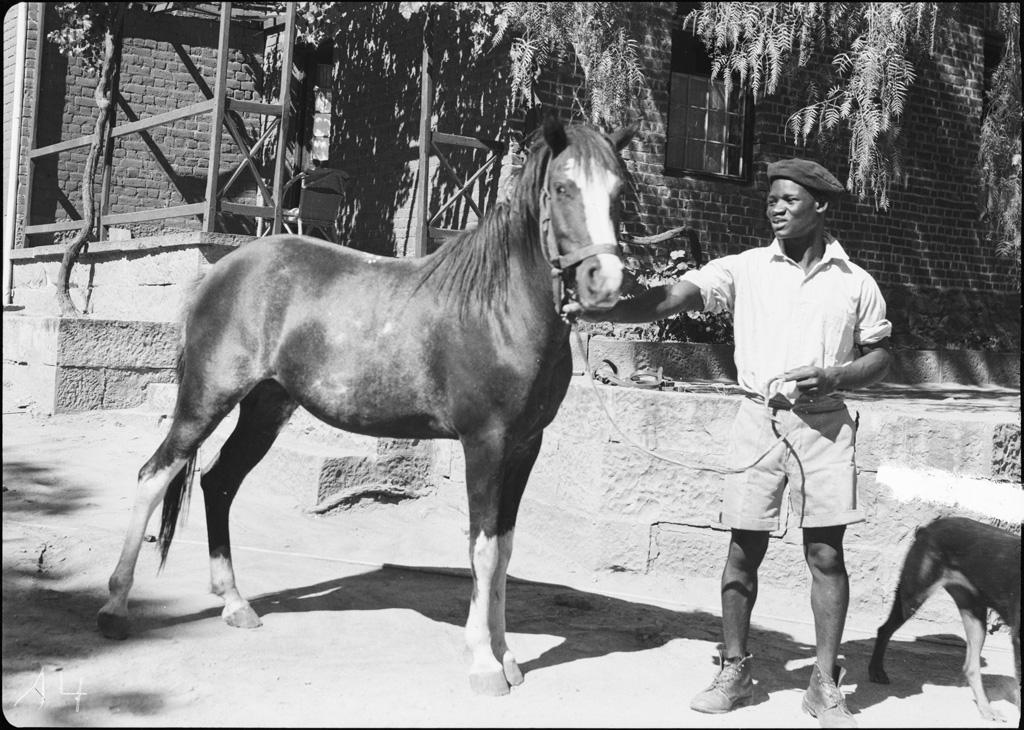 [Boy scout tenant un cheval par les rênes] / non identifié