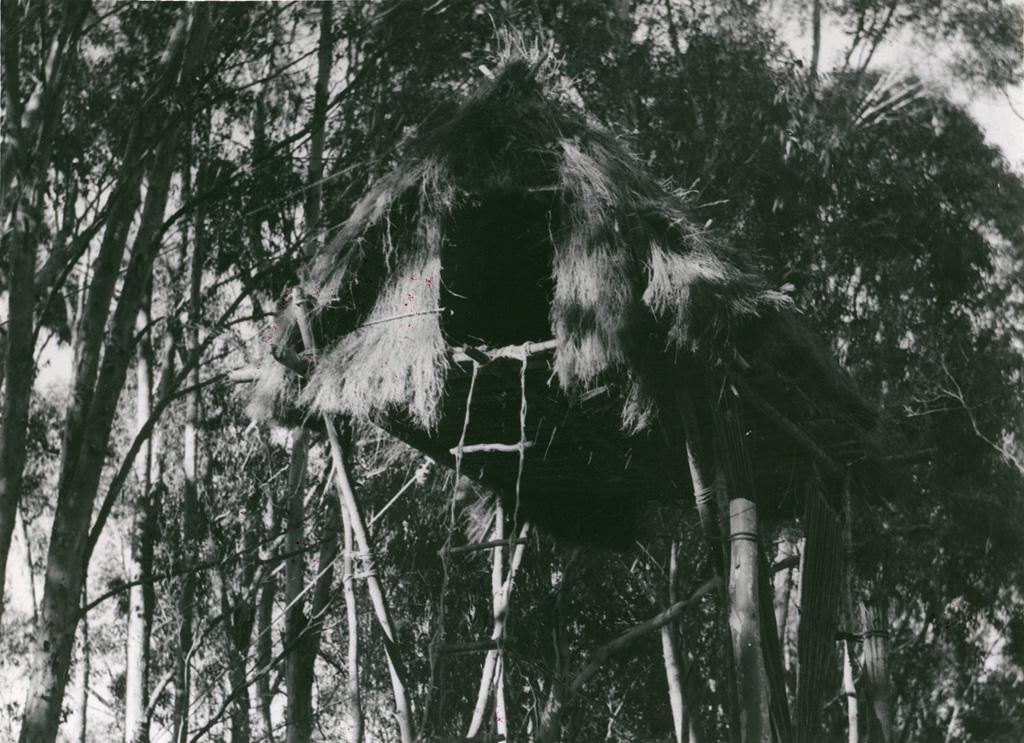 [Cabane dans un arbre]