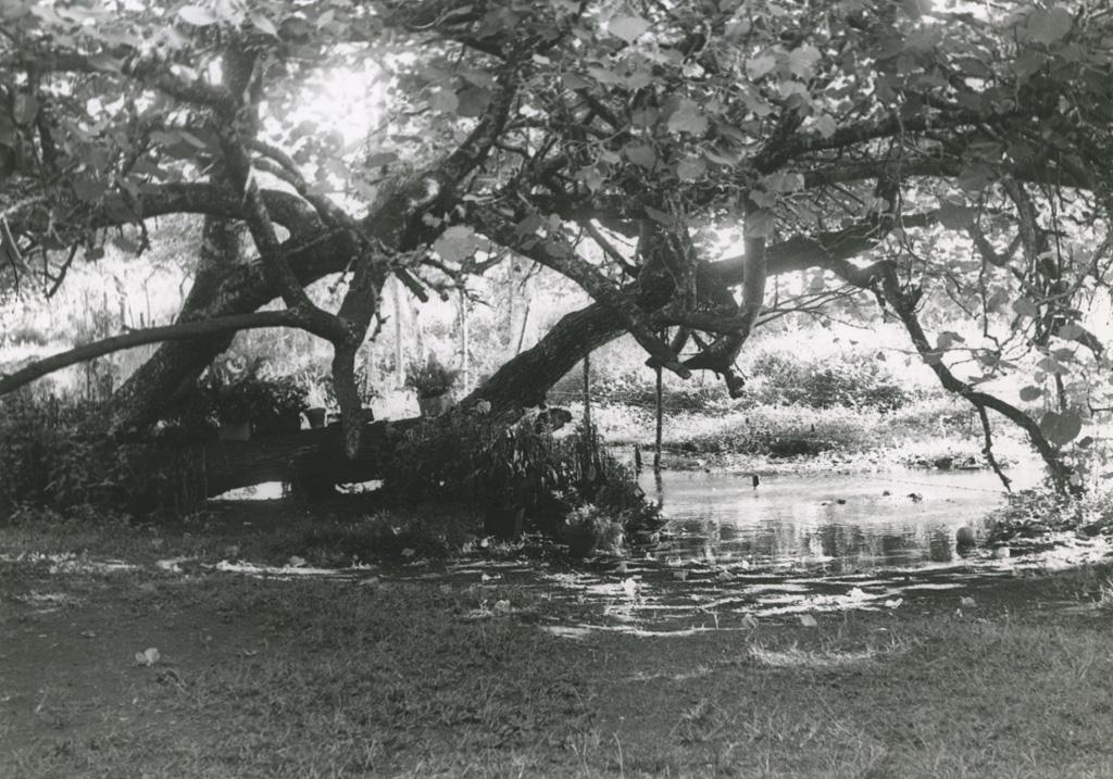 Camp d'éclaireuses à Papara. Paysage tahitien