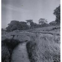 Canaux d'irrigation à proximité d'un verger