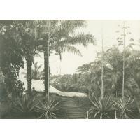 Case au milieu des palmiers, Ngomo