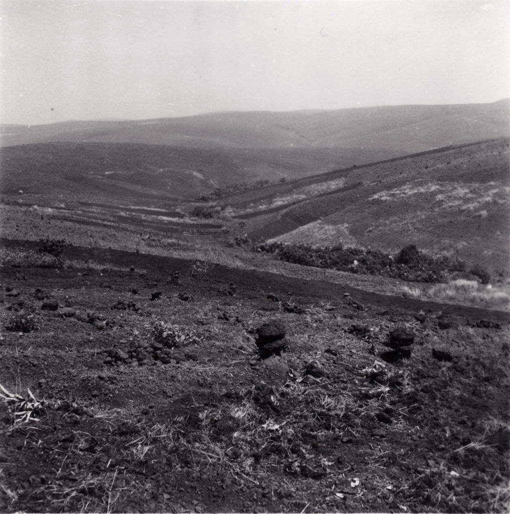Champ Bamoun (avec termitières) aux environs de Foumban
