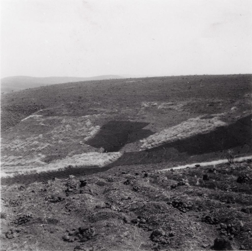 Champ bamoun aux environs de Foumban