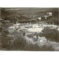 Char à boeufs traversant une rivière