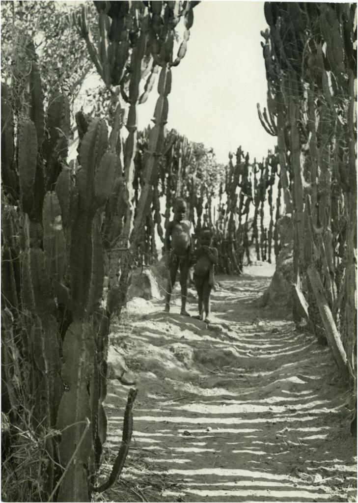 [Chemin au Cameroun]