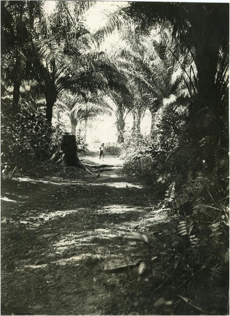 Chemin menant au village de Bonabeké, près Yabassi / non identifié (1930/1950)