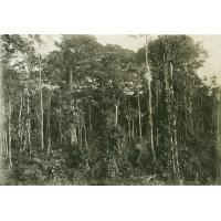 Clairière dans la forêt vierge
