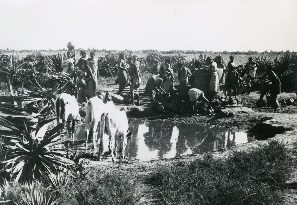 Corvée de l'eau et mare à laquelle le bétail vient boire