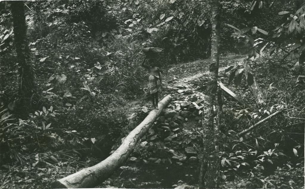 Dans la forêt, pont indigène sur la route de Lyamtum