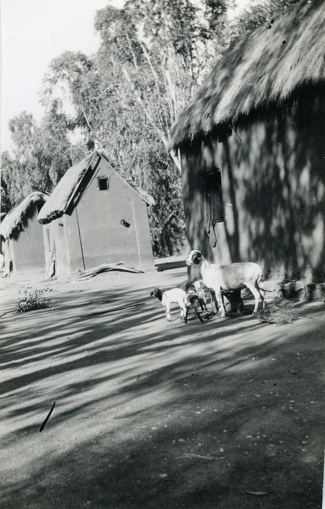 Dans le village Morarano