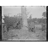 [Deux Africains abattant un arbre sous le regard d'un missionnaire]