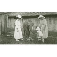 Eléphant de M. Brisebarre