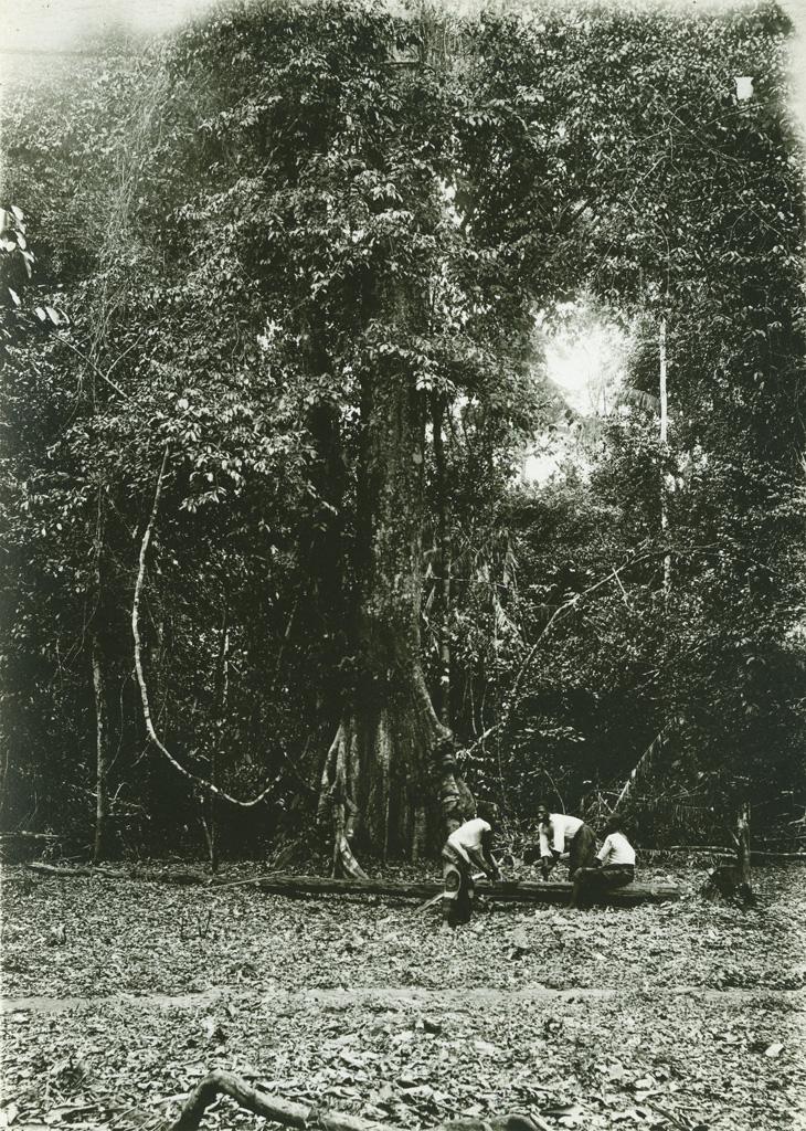 En forêt, au pied d'un géant