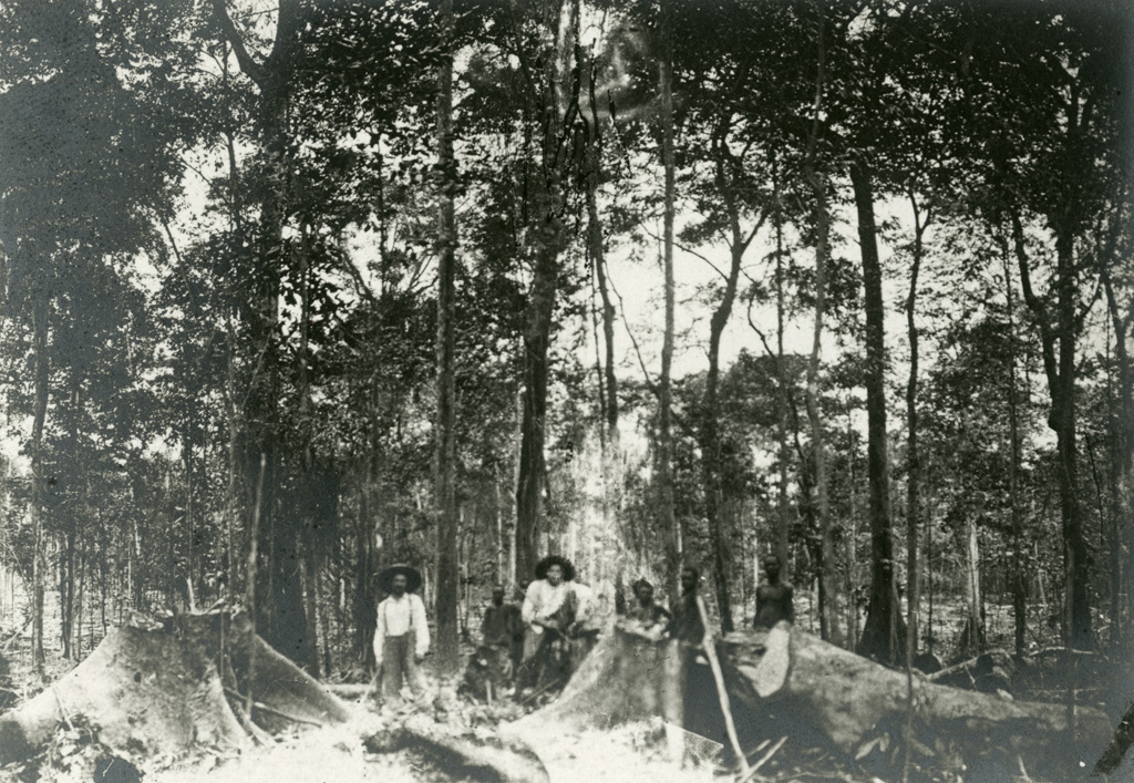 En forêt, coupe des arbres dirigée par les missionnaires