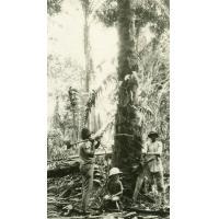 Enfant de missionnaires assis au pied d'un palmier que l'on va abattre