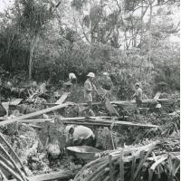 Exploitation d'un gisement de phosphate, atoll de Makatea
