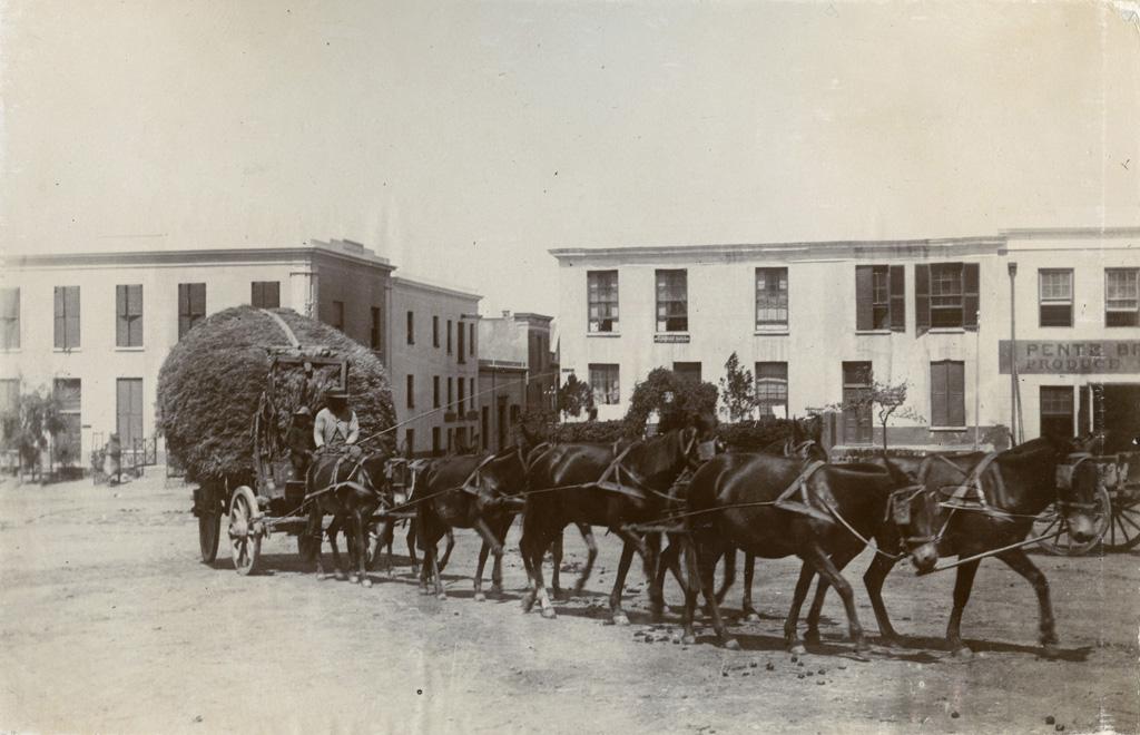 Fermier Boer allant au marché