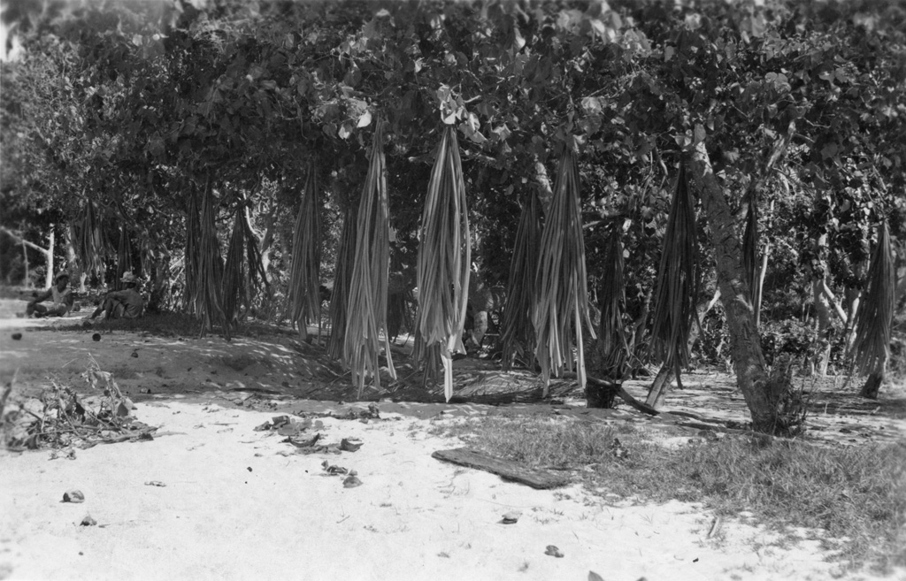 Feuilles de pandanus au séchage, Île Maupiti