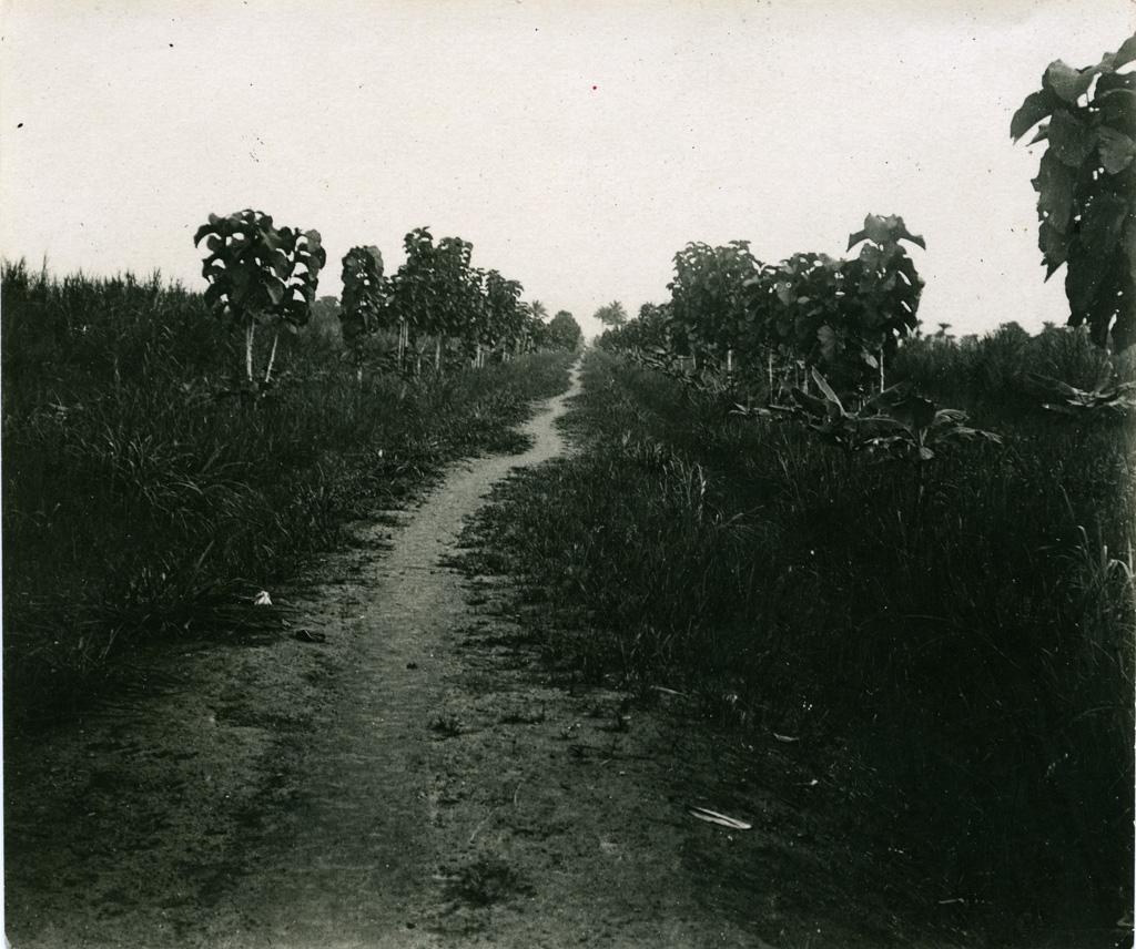 Fongwang's, route de Baré à Dschang / L.R. (1920/1930)