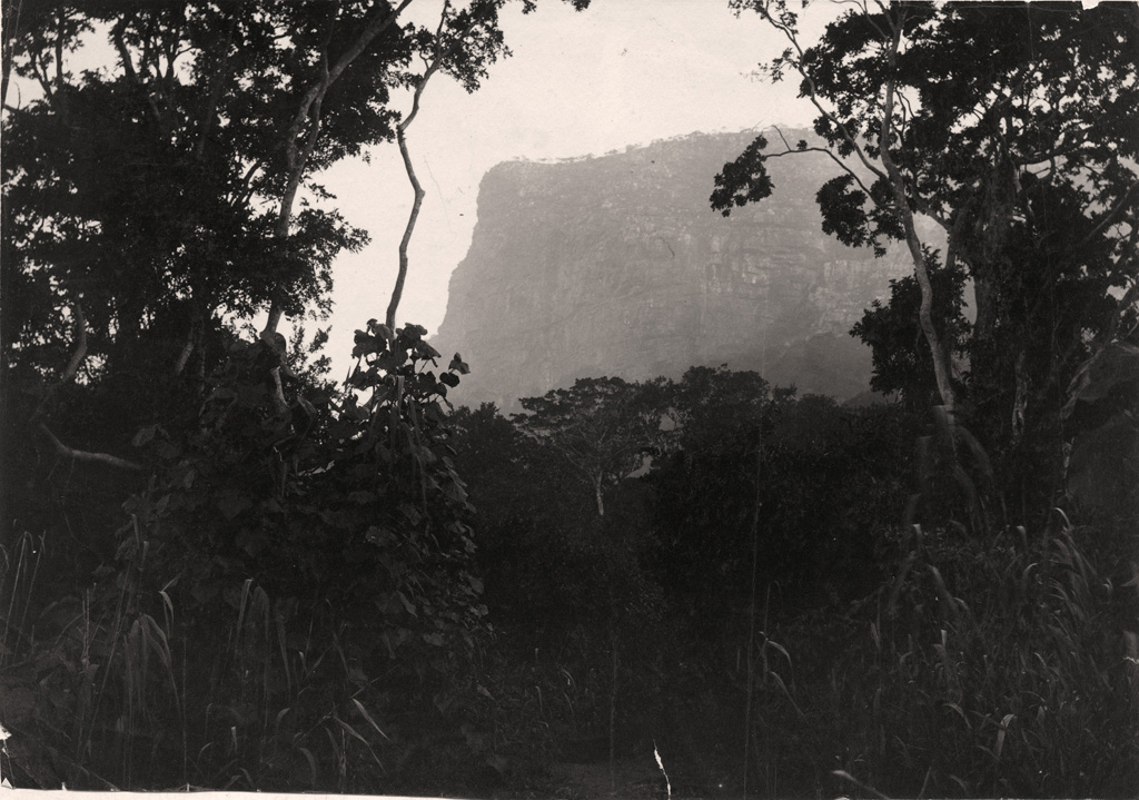 Forest scene on southern bank of St John's river showing western gate