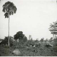 [Forêt]