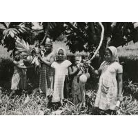 Fruits de l'arbre à pain