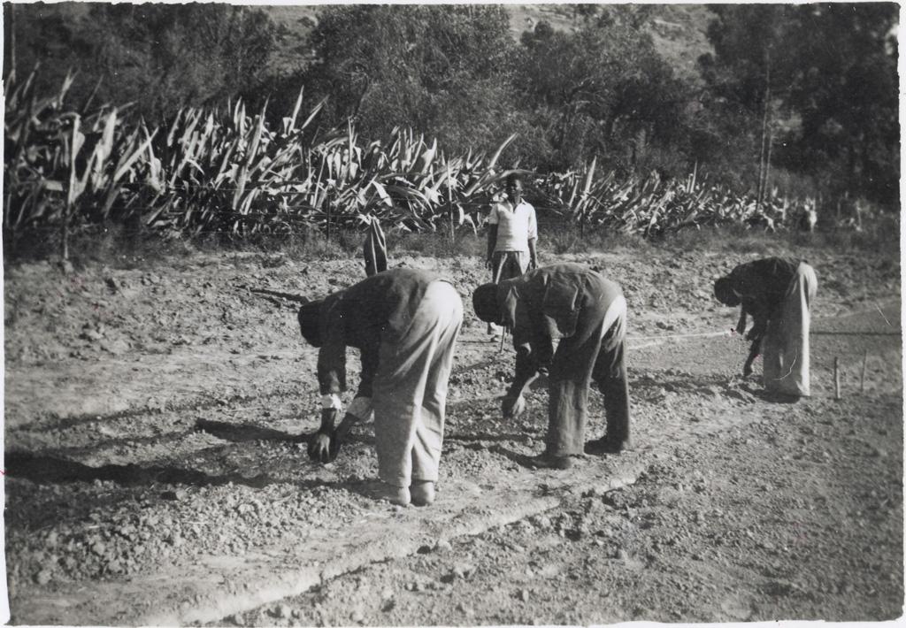 Jardinage à Cana / non identifié ([s.d.])