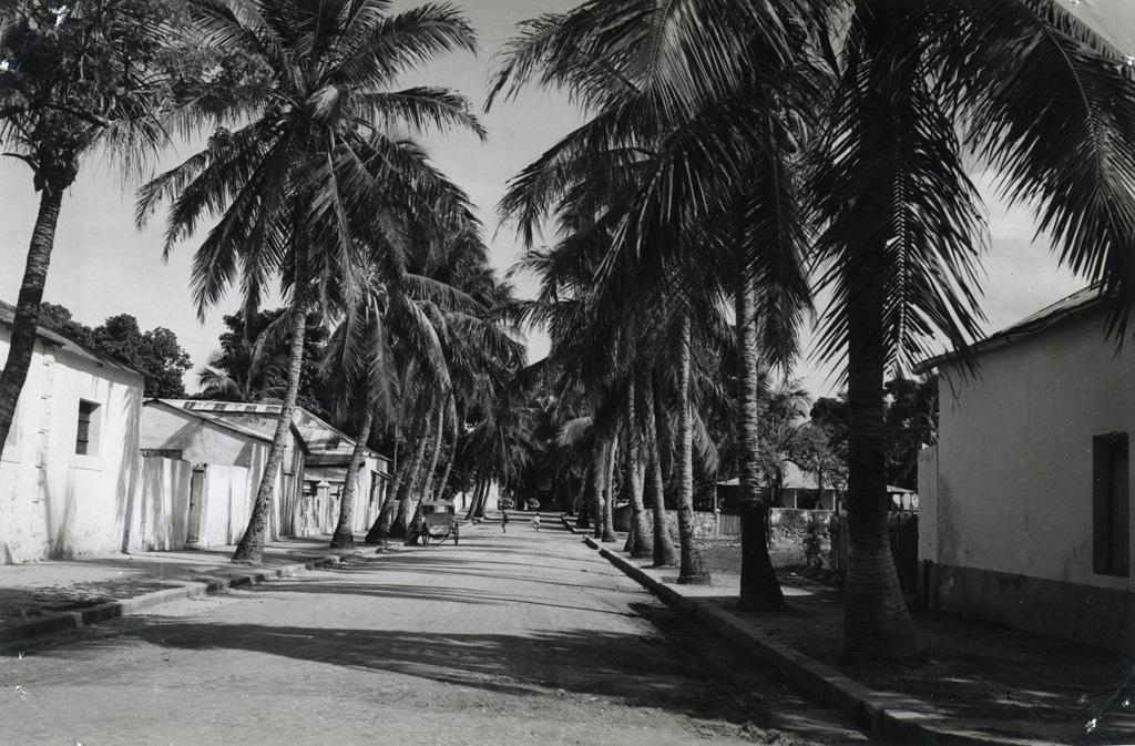 L'allée des cocotiers
