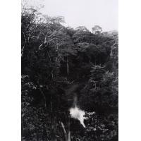 La forêt, exploitation Joly. Carbonnier