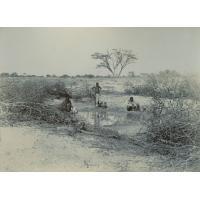 La mare de cacao ; les indigènes et le bétail s'y lavent ; le voyageur est ensuite heureux de s'y désaltérer !