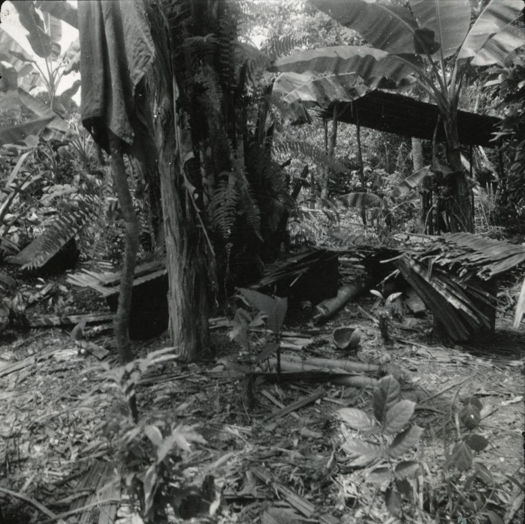 Le campement d'une guérisseuse dans la forêt