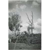 Le jardin de la station de Thaba-Bosiu après le cyclone (remarquez la plaque de tôle qui s'est enroulée autour de l'arbre)