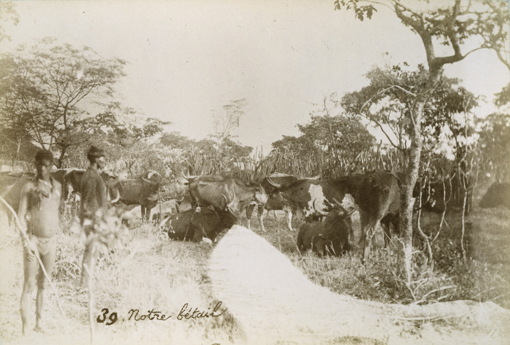 Leshoma, notre bétail