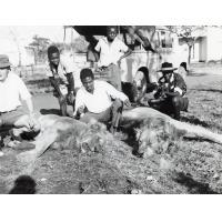 Lorsque deux vaches et un taureau eurent été enlevés en une nuit dans la ferme d'élevage de Chishinga dans la province de Luapula, on commença à trouver qu'il était temps d'en faire le prix aux ma