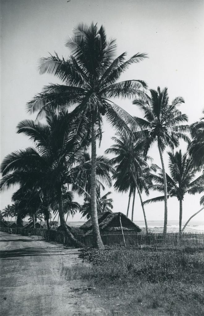 Palmiers, cases, cocotiers