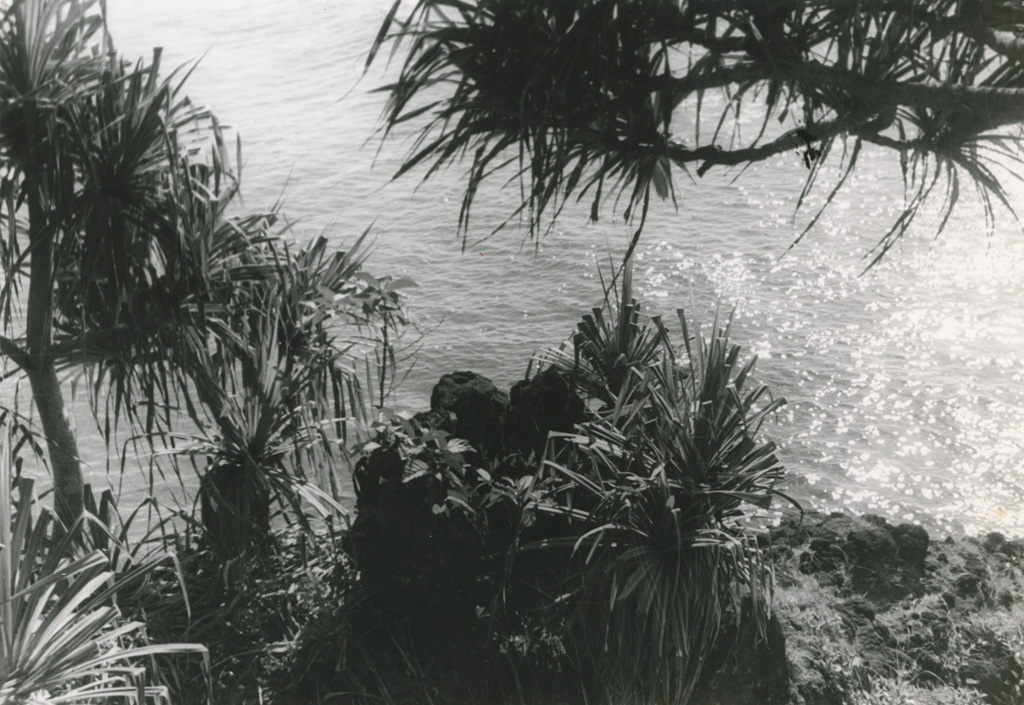 Pandanus ou 'fara' en tahitien, au bord de l'eau